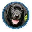 Black Lab Puppy Art