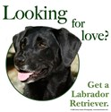 Looking for Love (Black Lab)