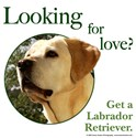 Looking for Love (Yellow Lab)