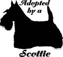 ADOPTED by a Scottie