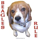 Beagles Rule!
