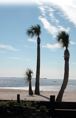Palms on the Coast