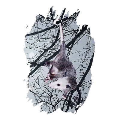 animal,art,awesome,awesome possum,cool,cute,deleas,gifts,marsupial,nature,opossum,possum, wildlife, pet, pets, t-shirt,t-shirts,tee,tees,tee shirt,tee shirts,jewelry boxes,buttons,bumper stickers,clocks,baby items,baby cloths,onesies,onseies,note pads,art prints,magnets,greeting cards,art cards,track suits,sweatsuits,sweat shirts,thongs,barbque aprons,aprons,shorts,hats,caps,mugs,steins,coffee mugs,mousepads,bibs,baby bibs,dog t-shirts,framed tiles,coasters,journels,ceramic ornaments,license plate frames,hoodies,messenger bags,posters,pillows,teddy bears,teddys,totes,tote bags,calendars