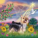 Cloud Angel & Silky Terrier