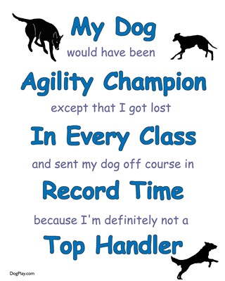 Agility Excuses: Could have been Champion