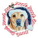 Yellow Lab in Santa hat