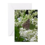 Butterfly : Hackberry Emperor Greeting Cards