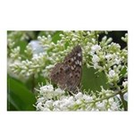 Hackberry Emperor Butterfly Postcards