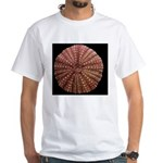 Red Sea Urchin shell, Strongyloce White T-Shirt