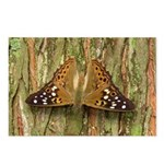 Butterfly : Hackberry Emperor Postcards