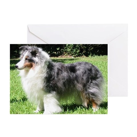 - Blue Merle Sheltie Rescue Greeting Cards Pk of 10 by CafePress