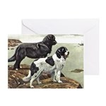 Newfoundland Dog Greeting Cards