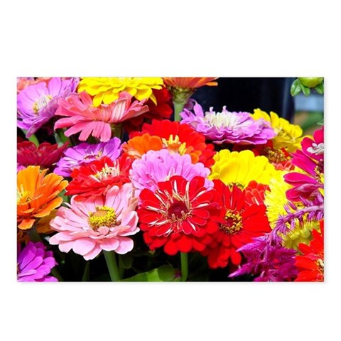 - Zinnias Art Postcards Package of 8 by CafePress