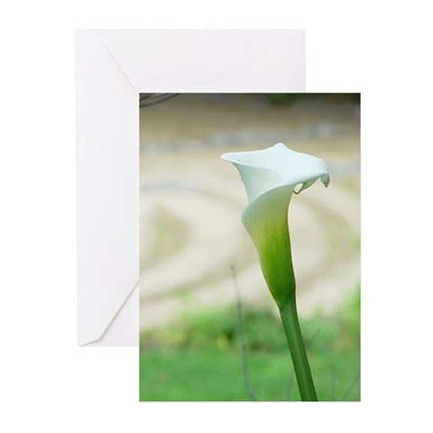 - Calla Lilly Religion Greeting Cards Pk of 10 by CafePress