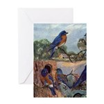 Bluebird Greeting Cards