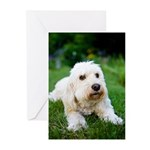 Goldendoodle Greeting Cards