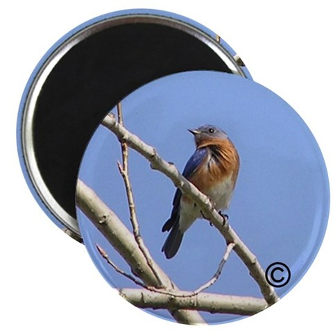 Bluebird In Spring  Nature 2.25 Magnet 100 pack by CafePress