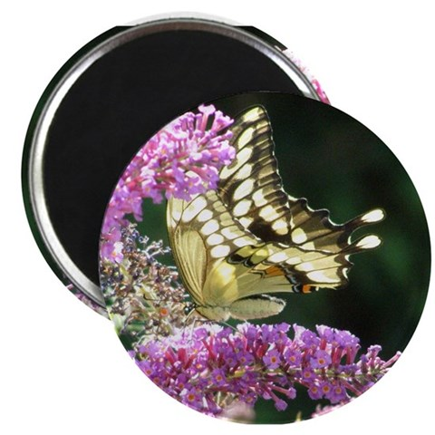 2.25quot; Butterfly Magnet 10 pack Nature 2.25 Magnet 10 pack by CafePress