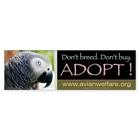 - African Grey African Bumper Sticker by CafePress