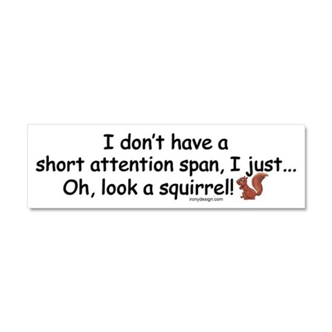 Attention Span Squirrel  Funny Car Magnet 10 x 3 by CafePress