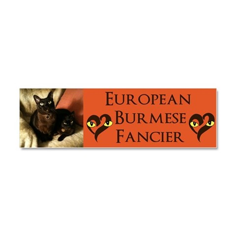 Burmese Cats on chair -  Pets Car Magnet 10 x 3 by CafePress