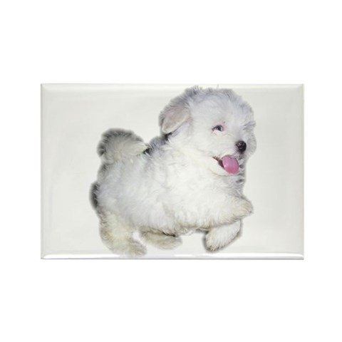 Cute puppy Pets Rectangle Magnet 10 pack by CafePress