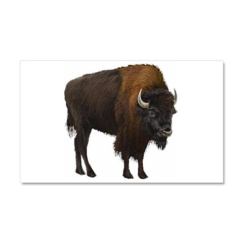 Buffalo  Buffalo Car Magnet 20 x 12 by CafePress