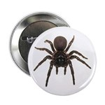 10 funnel web spider 2.25 inch buttons