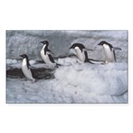 Penguin follow my leader Sticker (Rectangular)