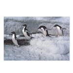Penguin follow my leader Postcards (Package of 8)