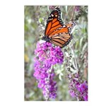 Butterfly: Monarch Postcards