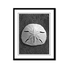 Sand Dollar (B&W) Framed Panel Print