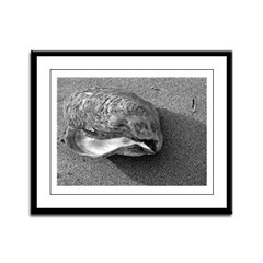 Eagle Shell (B&W) Framed Panel Print