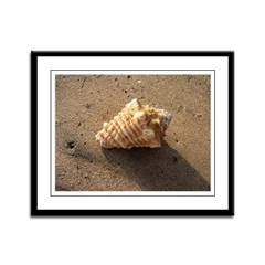 Conch Shell (Color) Framed Panel Print