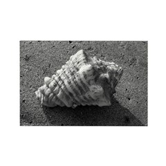 Conch Shell (B&W) Rectangle Magnet