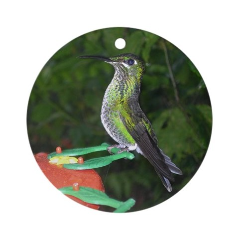 Hummingbird Ornament Round Birds Round Ornament by CafePress