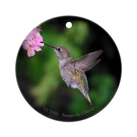 Anna's Hummingbird Ornament Round Nature Round Ornament by CafePress